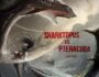 Sharktopus vs. Pteracuda (Hollywood Movie) – Review, Cast & Release Date